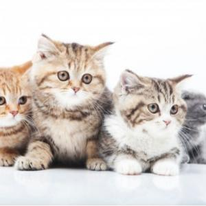 絶対に猫に食べさせちゃダメ!命に関わる危険な食べ物10選