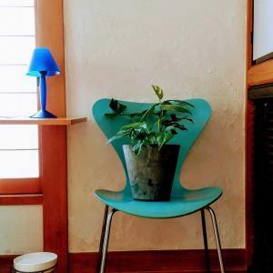 寛容植物と私。アラフィフ新入生@園芸部