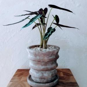 おやつと植物は一種類、ひとつまで。My only one rule.