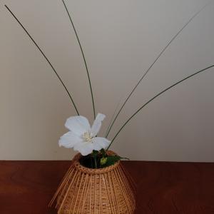 自宅稽古の花です。