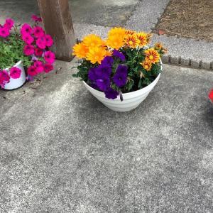 我が家の花たち💐🌼🌸