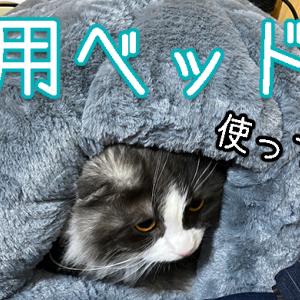 猫用ベッド使ってる?
