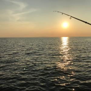 【8月夕まずめアジング】泉大津で短時間の釣行
