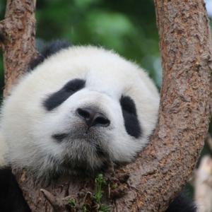 【国際恋愛】カナダ留学で中国人彼氏と付き合うとは?