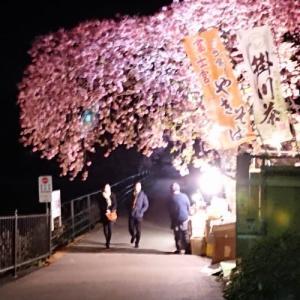 【国内】静岡 河津桜まつり(ライトアップ)