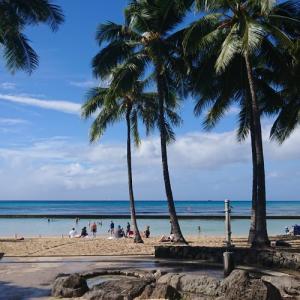 hanaloveでハワイ旅行があたる