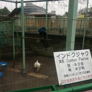 和歌山市[和歌山城公園動物園]までツーリング