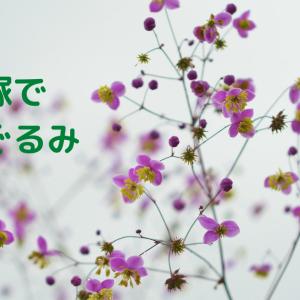 宝塚であみぐるみパート28🍡