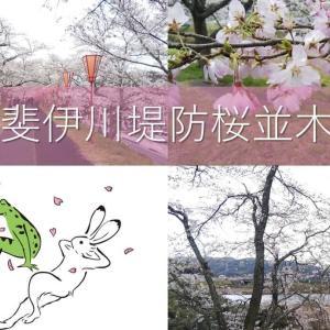 【お花見】雲南市は斐伊川堤防桜並木に行ってきた