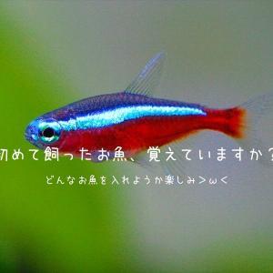 【熱帯魚】初めての水槽、何を飼ってみようかな?という話【超迷いがち】