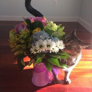 花を愛し、ワルツを歌う猫