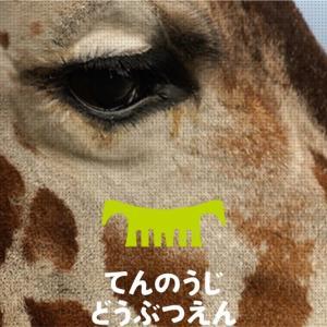 天王寺動物園が三密どころかゼロ密で超穴場スポットだった‼︎