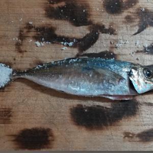 【時短料理】釣れたアジの塩焼きレシピ