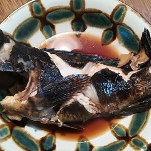 【簡単料理】釣れたタケノコメバルの煮付けレシピ