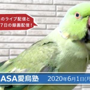オンラインによる「愛鳥塾100回記念講演」byTSUBASA