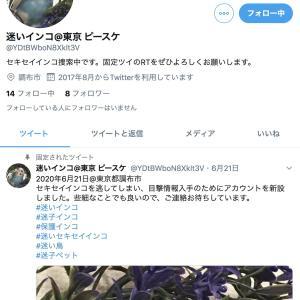 『拡散希望!』迷いインコ@東京ピースケ