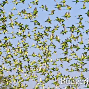 「オーストラリア・ニュージーランド鳥観旅行記」