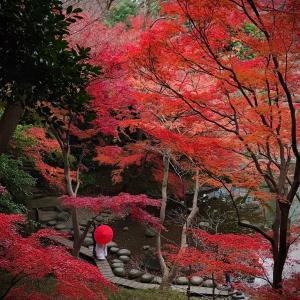 小石川後楽園の紅葉 Part4