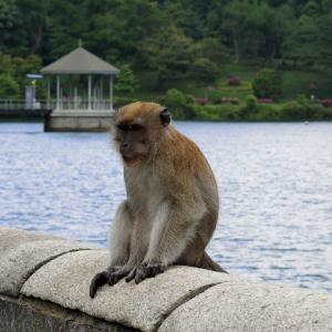 マックリッチ水源地でお猿さんに遭遇