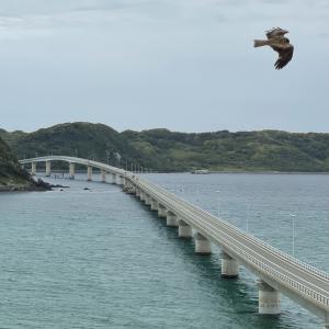 初夏の山陰旅行〜角島大橋を渡る
