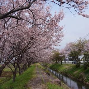 神奈川外出自粛に伴い、こまちゃんと家族でお散歩!