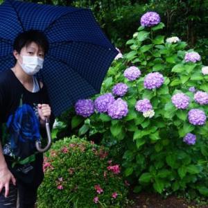 梅雨の鎌倉~まつばら庵、変化