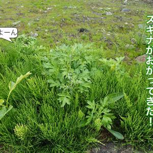 土地に雑草が生えてきました→なんとかせねば