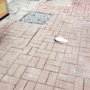 言動には気を付けよう&自粛生活でぐうたらな鳩たち
