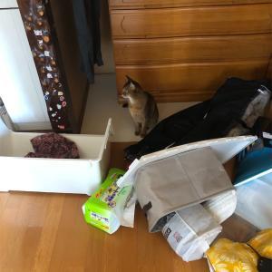 猫さんのいたずら〜少しだけ捨て活した話。ミニマリストはあきらめていません。