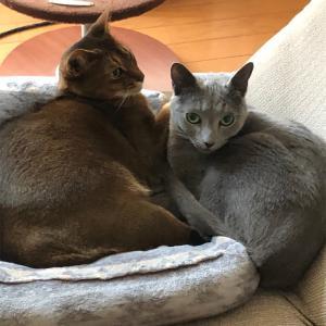 ミニマリストに憧れる。心の中の矛盾~猫さんのグッズ選びと忘れっぽいワタクシ~