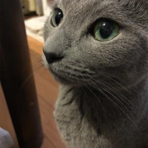 猫さんスペシャル〜ぷくたん〜