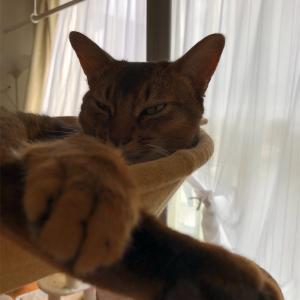 お昼寝したい飼い主と猫さん〜下僕精神〜