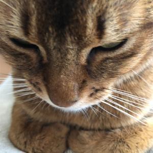 【ミニマリストに憧れる】捨て活継続中〜と猫さんのこの部分について〜