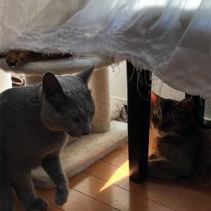 夏が始まった!〜猫さんの居場所〜