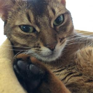 【猫さんと暮らす】我が家のストーブ対策【ズボラ流】
