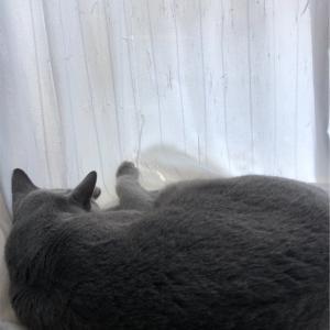 本日休息日〜2日目〜【猫さんと共に】