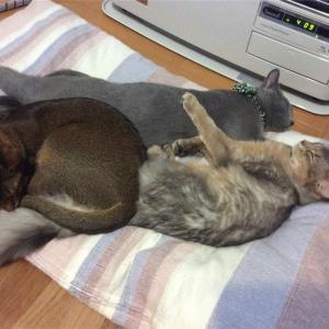 【猫さん暮らし】猫さんと過ごす何もない一日【ズボラ主婦】
