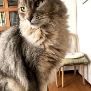 【ズボラ主婦】おうち時間が楽しい【猫さんと暮らす】