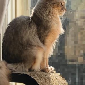 【猫さんと暮らす】今日の猫さん