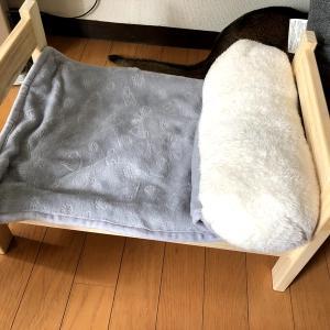【猫さんと暮らす】猫ベッドで喜ぶ飼い主【無印とスリコでお買い物】