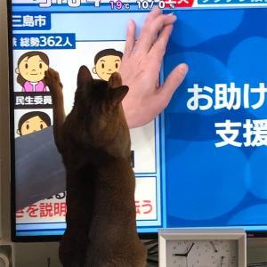 【ミニマリストに憧れる】コスメの捨て活と猫さん