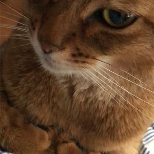 【猫さんと暮らす】最近の猫さんたち【多頭飼い】
