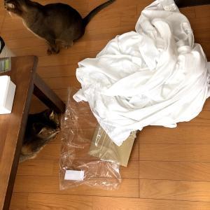 【猫さんと暮らす】廃墟風フリンジカーテンにさよなら・・・【ズボラ主婦の家事】