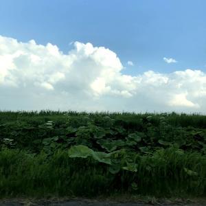 【夏の支度】扇風機兄弟復活~今年も働くよ~