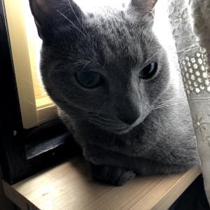 猫さんと家事~ズボラ主婦の日常~