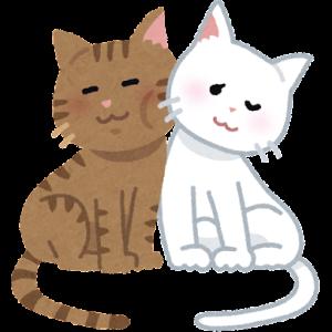 【猫さんと暮らす】猫さん×猫さん=すごくかわいい