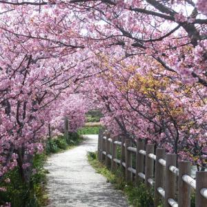 山本の堰に春が