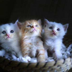 让我们被可爱的动物治愈!
