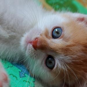 猫がかかりやすい病気 こんな症状ありませんか
