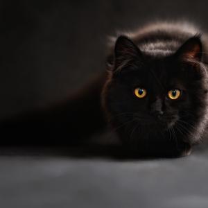 猫の高齢化問題 =シニア猫に必要な介護とは=